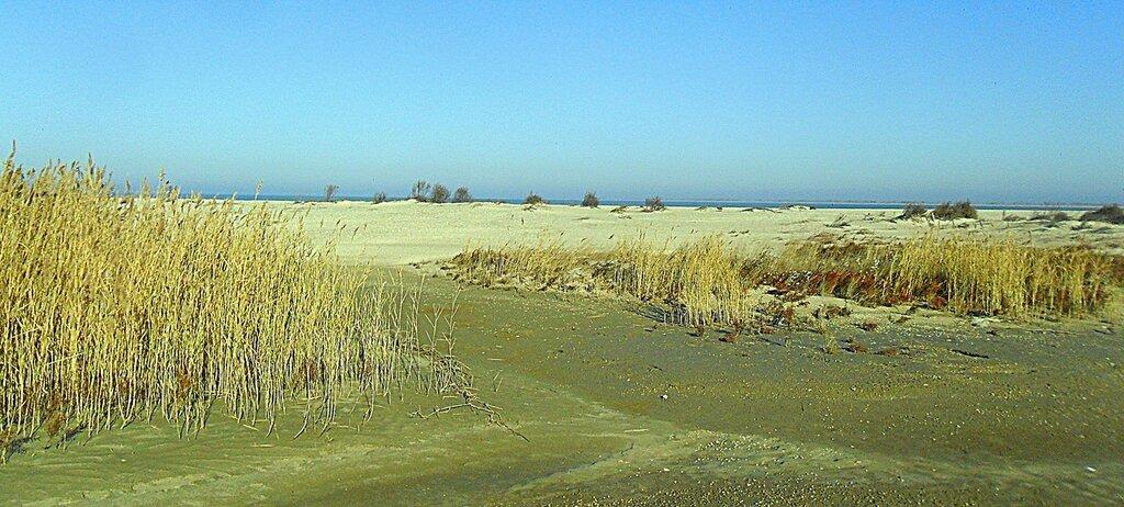 У камыша и песка .... SAM_4500.JPG