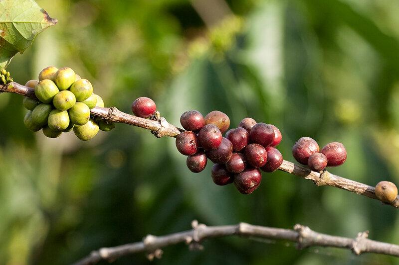Кофе-3