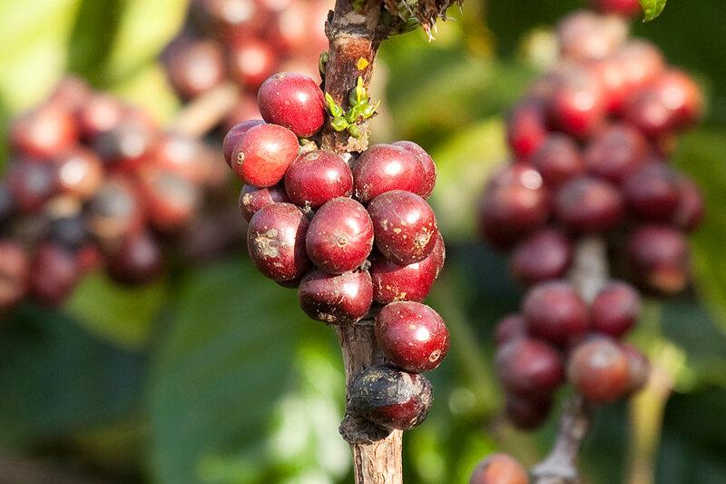 Кофе-5