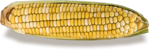 kimla_littlegarden_sweetcorn_sh.png