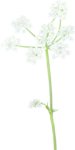ial_ao_sng_flower3.png