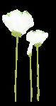 Lily_Spring_el24.png