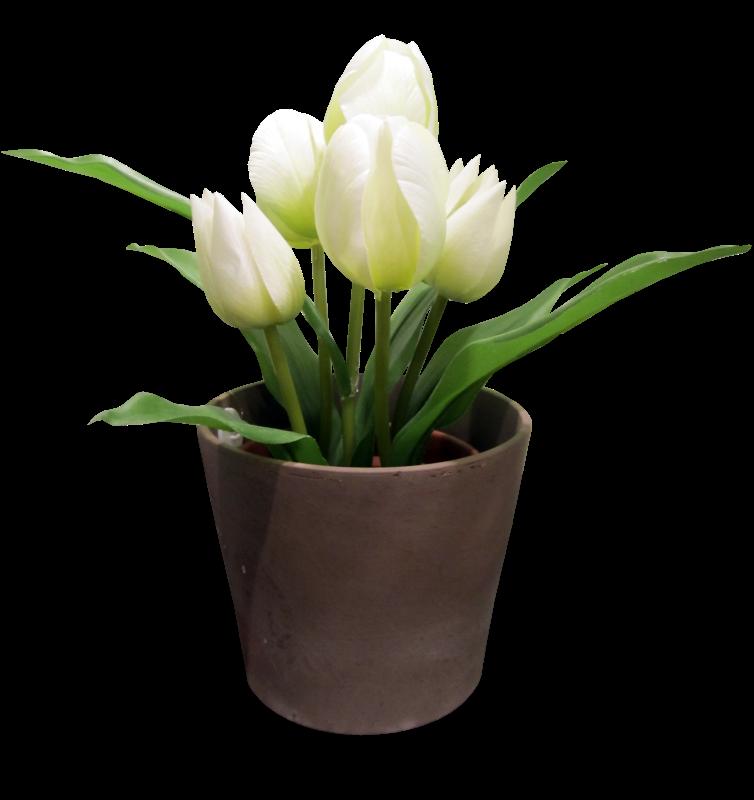 Tulips,��������