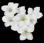 natali_design_easter_flower15.png