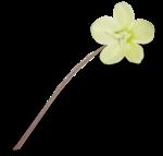 natali_design_easter_flower16b-sh1.png
