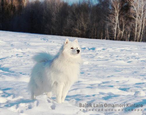 http://img-fotki.yandex.ru/get/58191/151696295.0/0_76574_de13cd0b_L.jpg.jpg