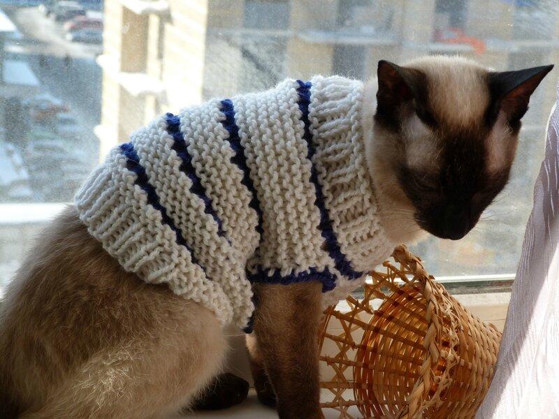 Вязание кофта для кошки 846