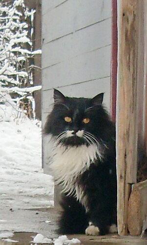 Зимний кот