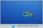 Коралловый риф 3D / Faszination Korallenriff 3D (2011) Blu-ray + BDRip + HDRip