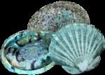 nb_lg_shellcluster1.png