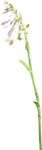 ial_elb_flower2.png