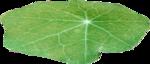ial_elb_leaf2.png