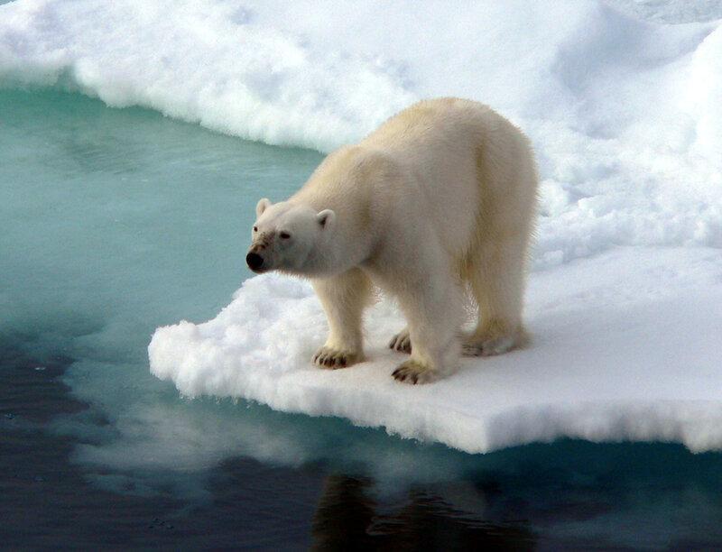 король Арктики
