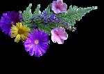 12930417418_fleurs_nikita.png