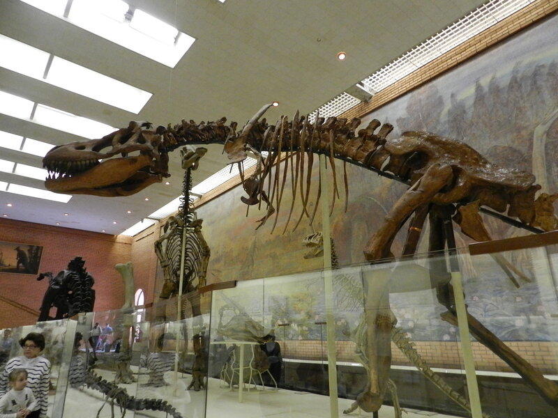 музей палеонтологии в санкт петербурге фото решается