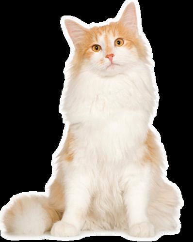 سكرابز قطط 2012 بدون تحميل