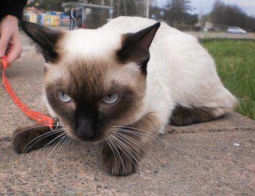 Коты и кошки красноярска