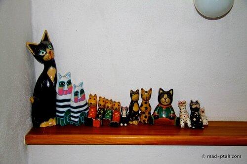 гостиница, коты