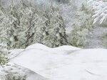 R11 - Winter Time - Back 022.jpg
