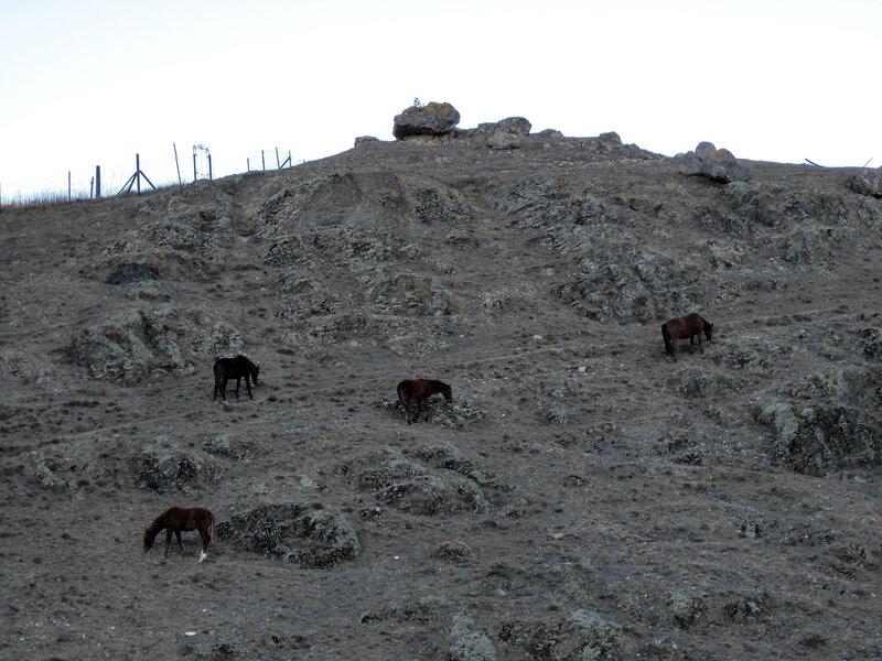 Кони на склоне