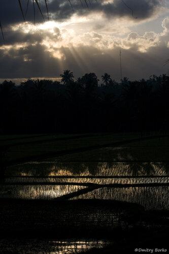 Рисовые поля под Убудом