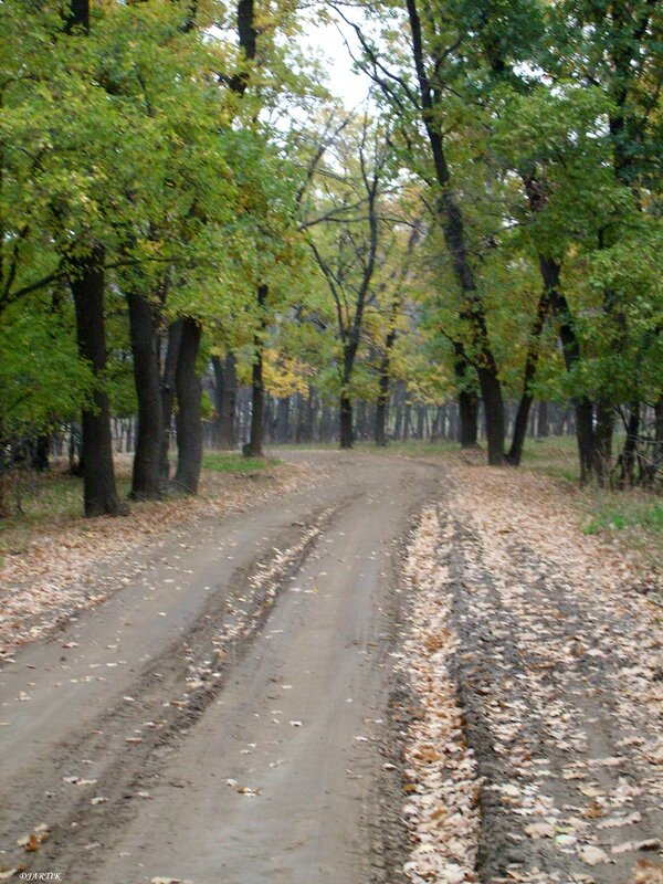 Дорога через лес.