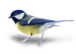 natali_design_dream_bird2-sh.png