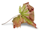 natali_design_dream_leaf3-sh2.png