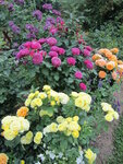 Golden Border,Verschuren, 1993,Goldelse,Tantau, 1999,Heidi Klum Rose,Tantau 1999,Rhapsody in Blue,Cowlishaw/Warner, 2002