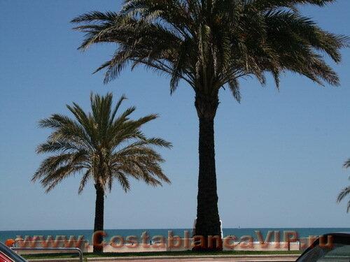 Апартаменты в Gandia, апартаменты в Гандии, квартира в Гандии, апартаменты в Испании, квартира в Испании, недвижимость в Испании, апартаменты на пляже, квартира на пляже, пляж, Коста Бланка, CostablancaVIP
