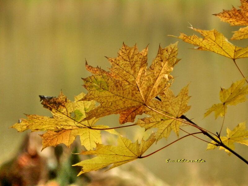 Осени грусть - это листья летящие...
