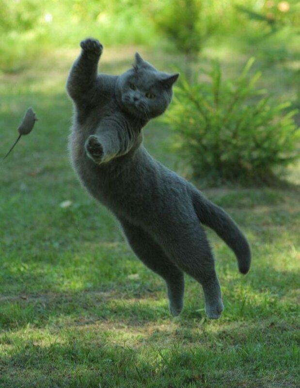 охота на летучую мышь