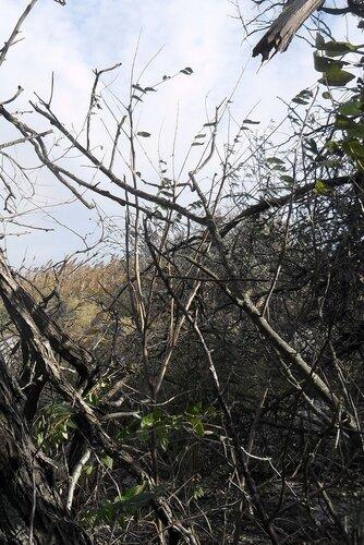 На Ясенской косе, октябрь 2011