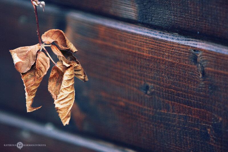 Осень от Екатерины Кармановской