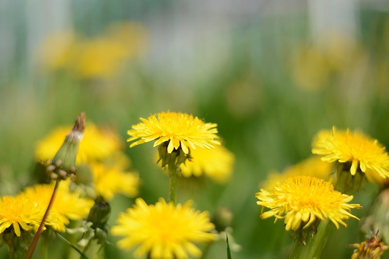 весеннее полянка