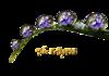 http://img-fotki.yandex.ru/get/5821/94689460.cb/0_69072_4620f1ff_XS.png