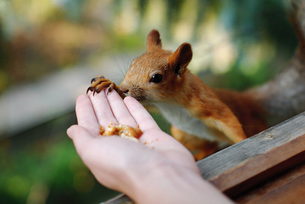 Природа России: протяни руку живому миру
