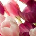 О цветах и букетах...