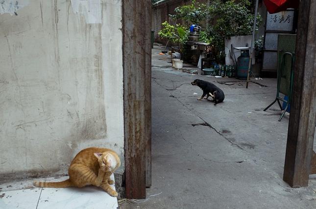 Смешные фото от Тао Лю
