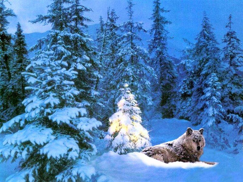 Красивые зимние обои