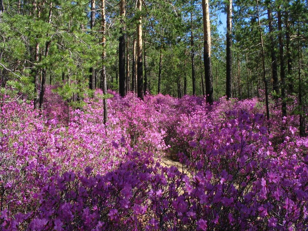 Картинки забайкалье весной