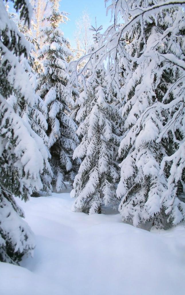 Беларусь по снегу видео