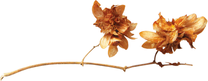 ldavi-snowflakes-dryflower1.png