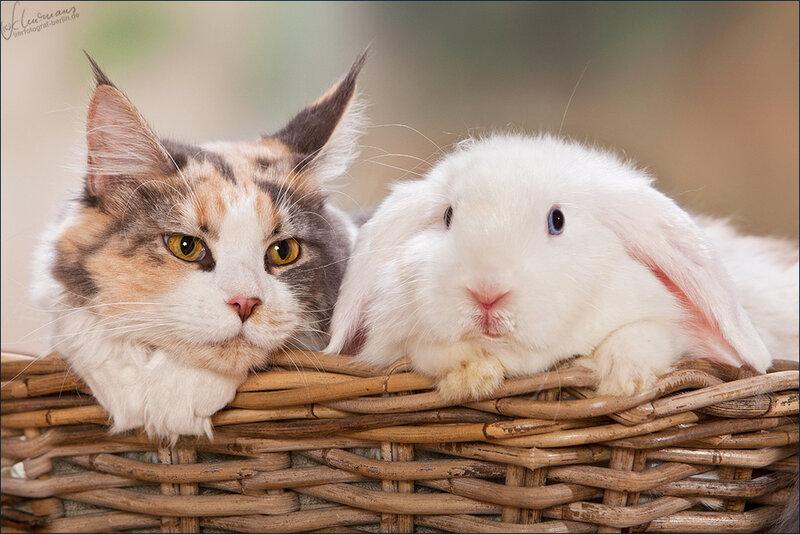 Картинки про зайцев и котов