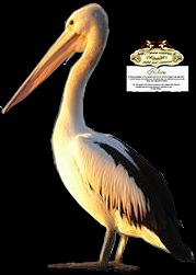 Ptice..... 0_b9118_718000d1_M