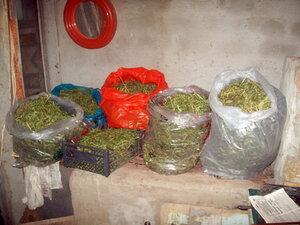 Умельцы в Молдове оборудовали теплицу для выращивания конопли