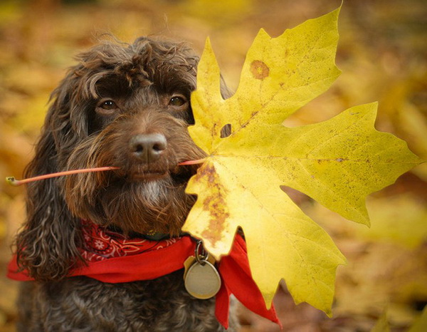 фото конкурс собак