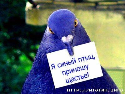 http://img-fotki.yandex.ru/get/5823/34158104.1b/0_b8183_4e78b462_L.jpg