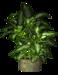 R11 - Garden PotPlant 2014 - 200.png