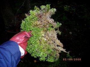 сфагнум. мох, грунт для рассады, земля под рассаду